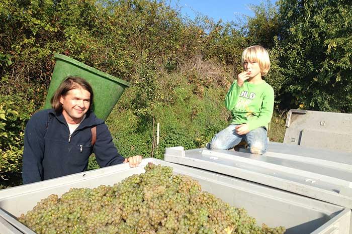 Arbeit im Weinberg des Weinguts Müller-Dr. Becker in Dalsheim